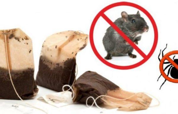 אם תשתמשו בתיון לעולם לא תראו שוב בבית עכבישים ועכברים