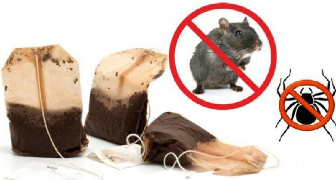הטריק הפשוט והגאוני הזה ירחיק לנצח עכברים, עכבישים וג'וקים מהבית שלכם!