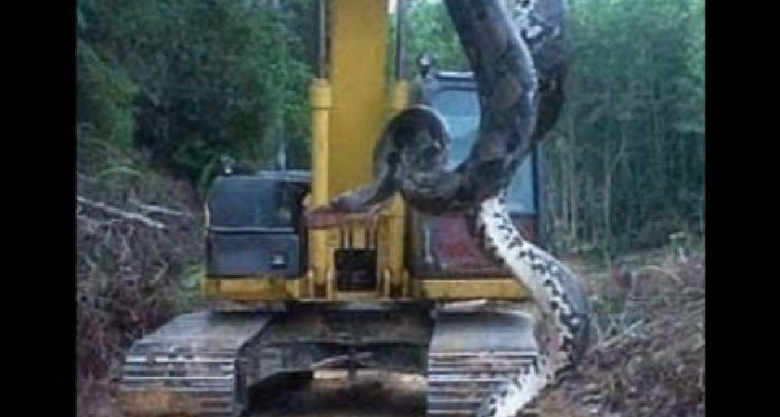 נחש אנקונדה באורך 10 מטרים נמצא בברזיל, וזה הדבר הכי מפחיד בעולם