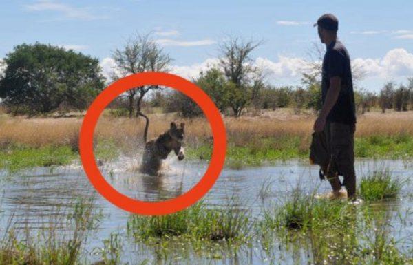 הוא הציל גורת אריות ממוות ודאי – עכשיו תראו את האיחוד שלהם ארבע שנים אחר כך