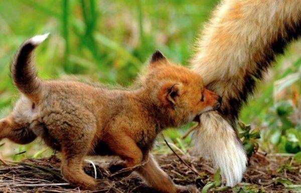 20 החיות הכי חמודות בעולם שיודעות שהן תמיד יכולות לסמוך על אהבה של אמא