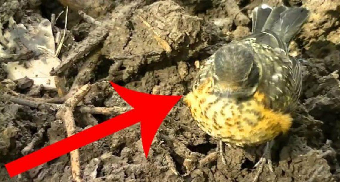 ציפור קטנה שחיפשה עזרה התקרבה לגנן. מה שקרה אחר כך ישאיר אתכם ללא מילים!