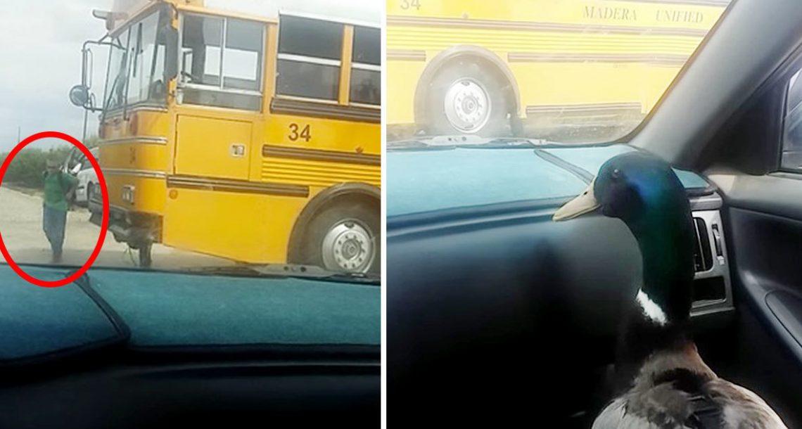 ברווז חיכה בהתרגשות בתוך הרכב – עכשיו תראו איך הוא מגיב כשהוא רואה את חברו הטוב ביותר