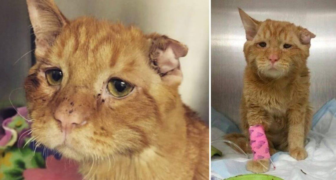חתול 'בלתי ניתן לאימוץ' היה מועמד להמתה, אבל כל מה שהוא היה צריך זו הזדמנות להוכיח את עצמו