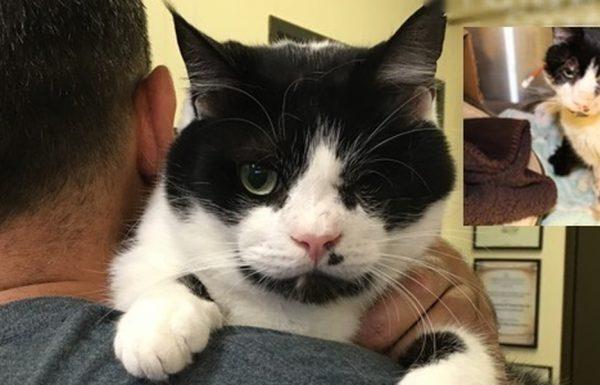 חתול נס שנפגע על ידי מכונית ונקבר, יצא מהקבר שלו ומצא בית חם, אוהב וקבוע