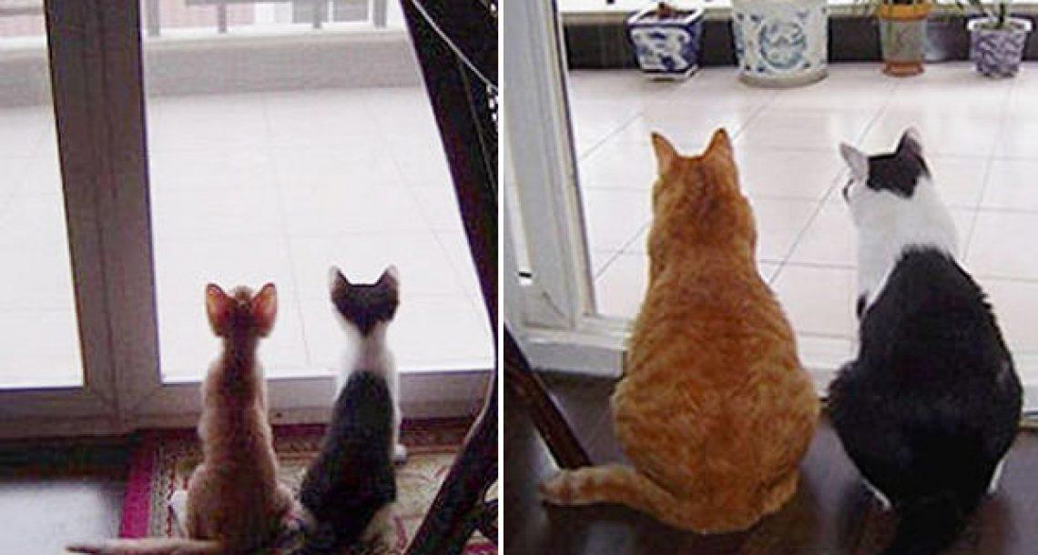 20 תמונות לפני ואחרי של חתולים גדלים שימיסו לכם את הלב