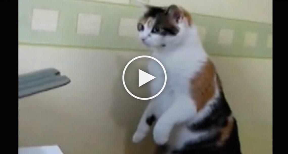 חתול מבולבל רואה מדפסת 'אוכלת' דפים. הדרך בה הוא מגיב תפיל אתכם לרצפה