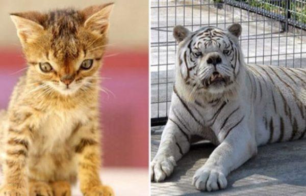 האם לבעלי חיים יש תסמונת דאון? הנה 14 בעלי חיים יפיפיים הסובלים מתסמונת דאון