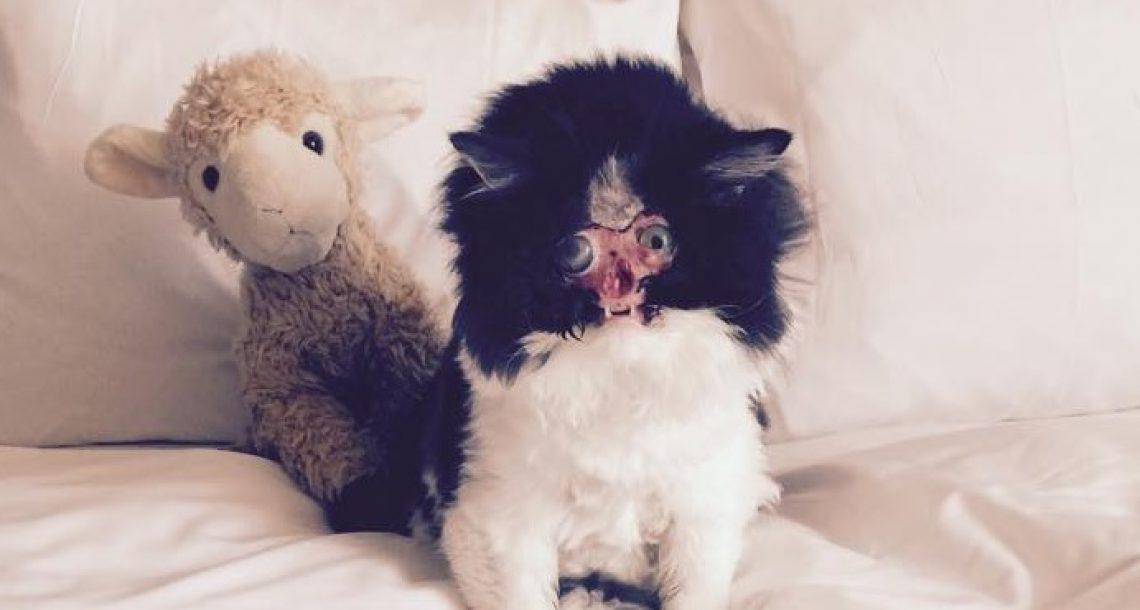 לחתולה שאיבדה את הפנים שלה בתאונת דרכים יש משפחה שאוהבת אותה בדיוק כפי שהיא