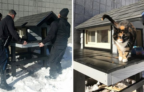 חתולת רחוב הגיעה לתחנת משטרה, אך במקום לגרש אותה, השוטרים בנו לה בית מדהים!