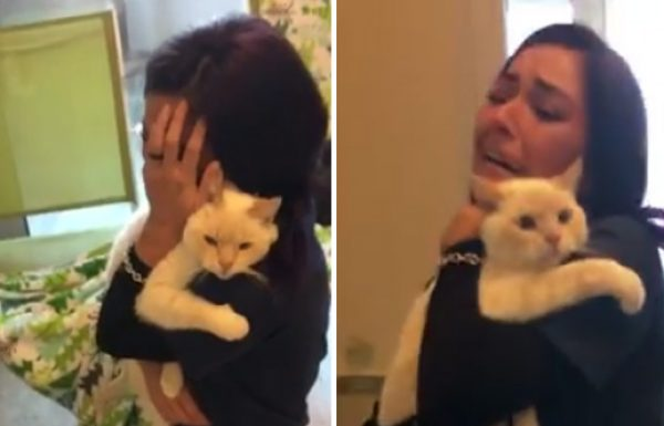 האישה הזו לא איבדה תקווה, ומצאה באתר אינטרנט את החתול שלה שנעלם לפני שנתיים