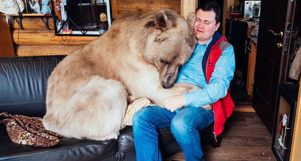 """גור דובים יתום חולץ על ידי זוג רוסים, אבל הם לא ציפו שדוב במשקל 150 ק""""ג יהפוך לחלק מהמשפחה שלהם"""