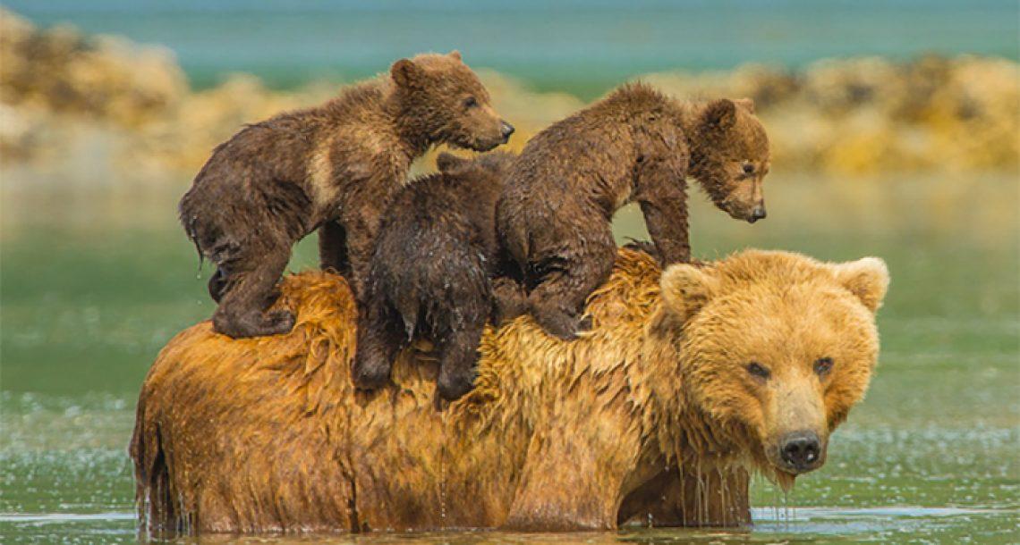 21 תמונות ממיסות את הלב של אמא דובה עם הגורים שלה