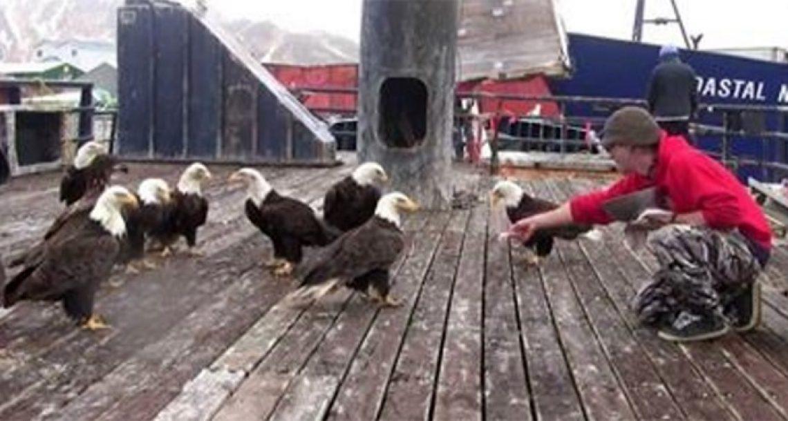 דייג האכיל להקה גדולה של ציפורי עיטם לבן ראש. ואז המצלמה עברה שמאלה…