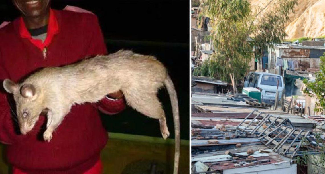 תינוקת נאכלה על ידי עכברושי ענק אחרי שאמא שלה יצאה לבלות כל הלילה