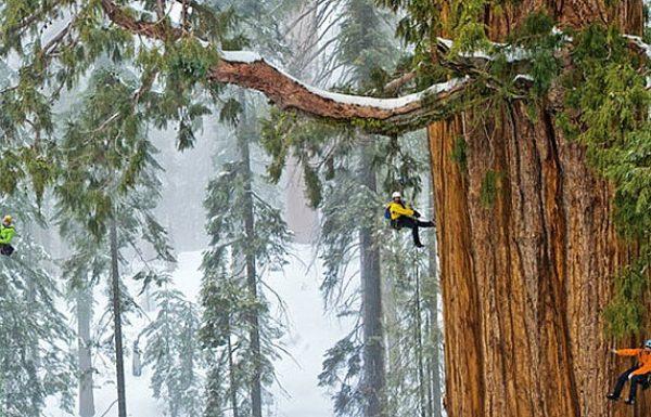 העץ הזה בן 3200 שנה כל כך גדול שמעולם לא הצליחו לצלם את כולו…עד עכשיו