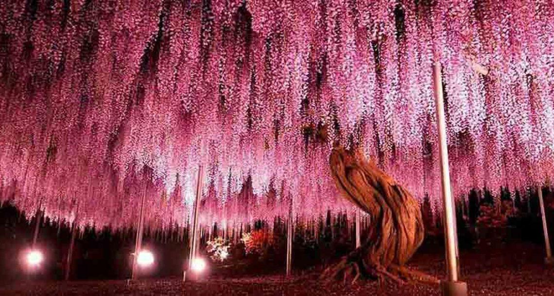 17 העצים הכי מדהימים ומטורפים שאי פעם תראו. #6 לא מהעולם הזה!
