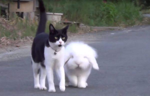 לחתול הזה יש חבר פלאפי, והם יותר מדי חמודים בשביל להחמיץ!
