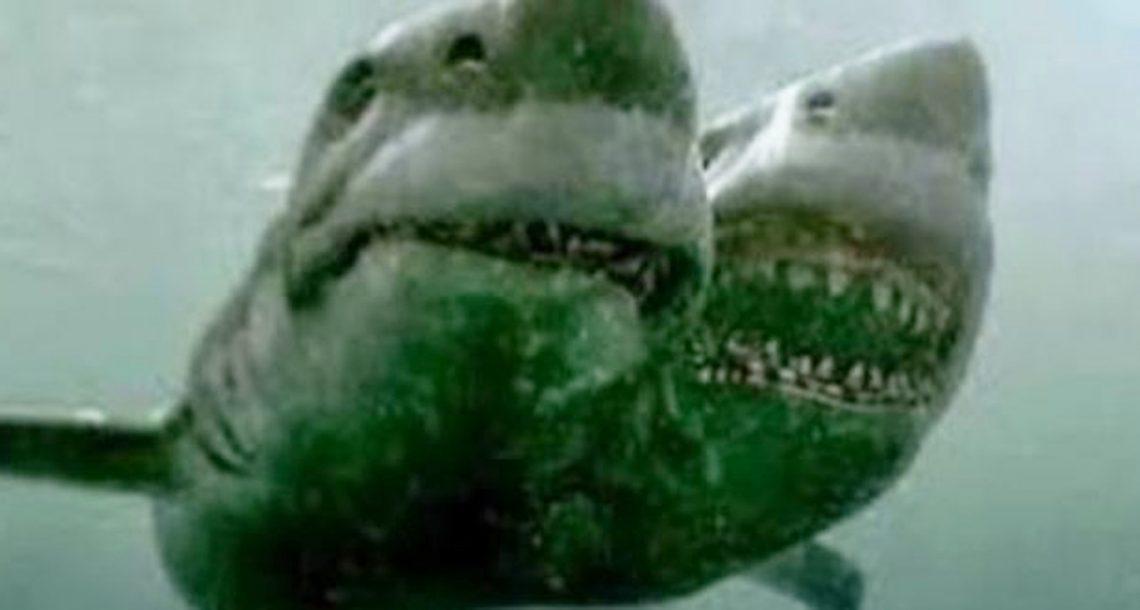בדיוק כשחשבתם שזה בטוח לשחות, מדענים גילו כריש נדיר עם שני ראשים