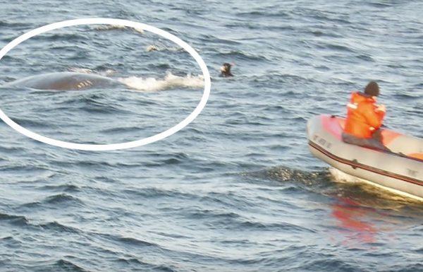 לווייתן התקרב לסירה והוציא את עינו מתוך המים. זה היה הרגע שהוא ראה את זה…OMG!