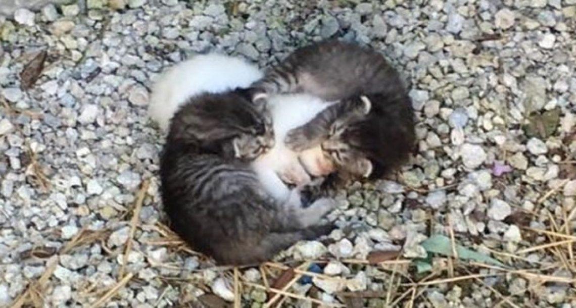 מחלצים מצאו שני גורי חתולים עוטפים את אחותה הקטנה והחולה כדי שיהיה לה חם