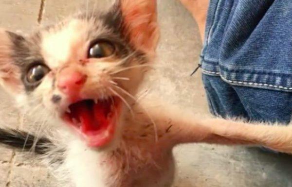 הוא ראה חתלתולה רעבה בוכה לעזרה. 3 חודשים לאחר מכן היא הפתיעה את כולם…