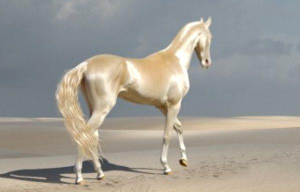 הכירו את היצור הנדיר שאנשים מכנים אותו 'הסוס הכי יפה בעולם'