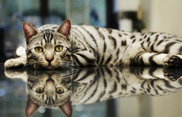 15 תמונות כל כך מדהימות שלא תוכלו להפסיק להסתכל עליהן