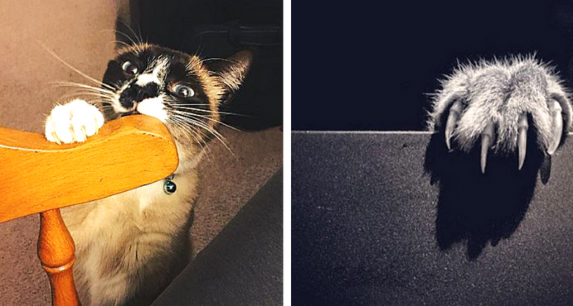 7 טיפים שיגרמו לחתול שלכם להפסיק להרוס לכם את הרהיטים
