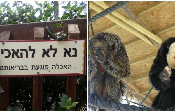 מבקרים האכילו קופים בחי-פארק בקרית מוצקין וגרמו למותם