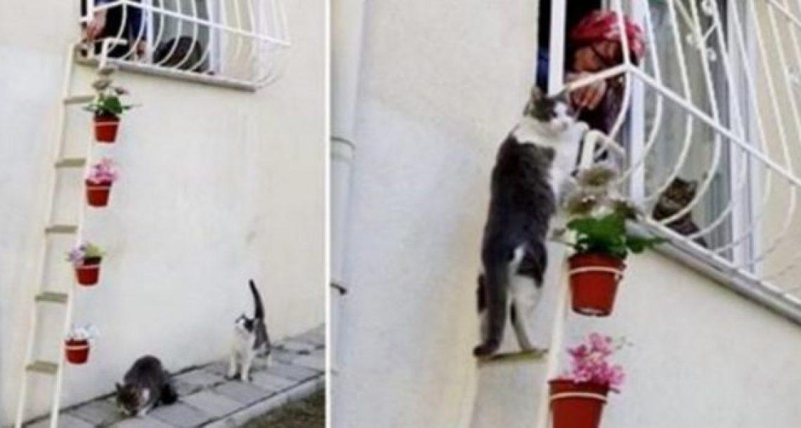 האישה הזו בנתה סולם עבור חתולי הרחוב כדי שהם יוכלו להיכנס לביתה ולברוח מהקור הנורא