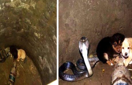 2 גורי כלבים נפלו לתוך באר יחד עם נחש קוברה – עכשיו תראו את התגובה הלא צפויה של הנחש