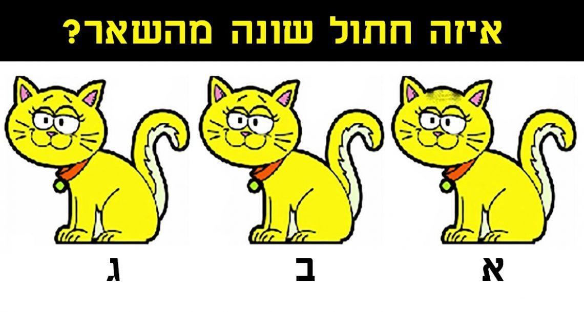 מעטים מצליחים: האם אתם יכולים למצוא איזה חתול שונה? נסו למצוא את הפרט החשוב!