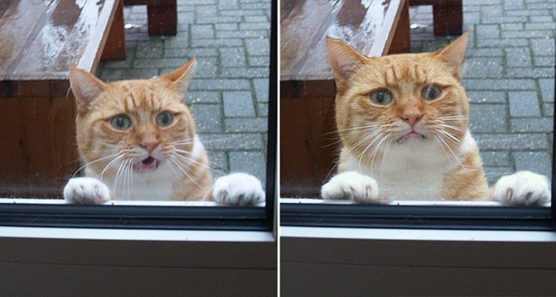 19 חתולים שסובלים ממשבר בחיים בגלל שאתם לא מכניסים אותם פנימה