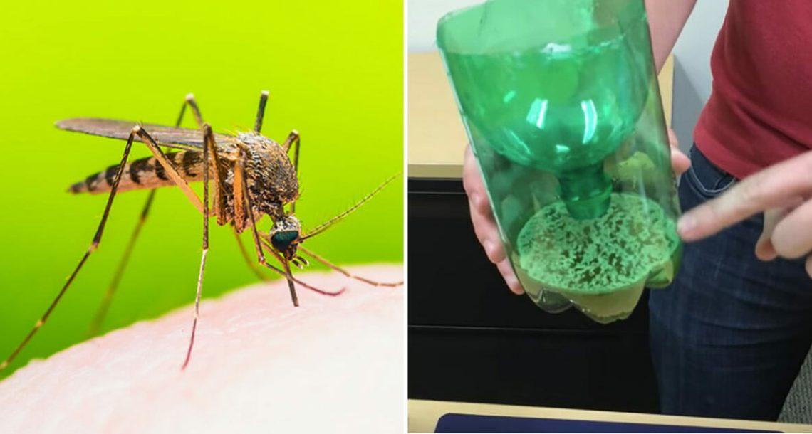 היפטרו מיתושים הקיץ – גלו את מלכודת 3 המרכיבים שיש בבית של כולם