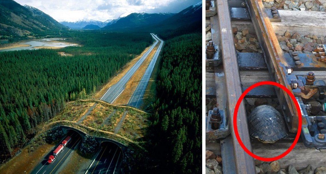 30 מעברים וגשרים מדהימים לחיות שמצילים את חייהם של מיליוני בעלי חיים מדי שנה