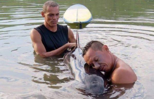 גולשים שמעו גור דולפין בוכה לעזרה, ומיהרו למקום כדי להציל את חייו