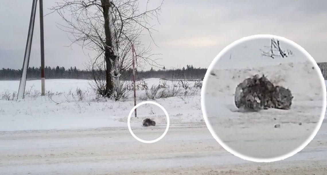 נהג ראה גוש אפור בשלג – בלם בפתאומיות כאשר ראה שהוא זז