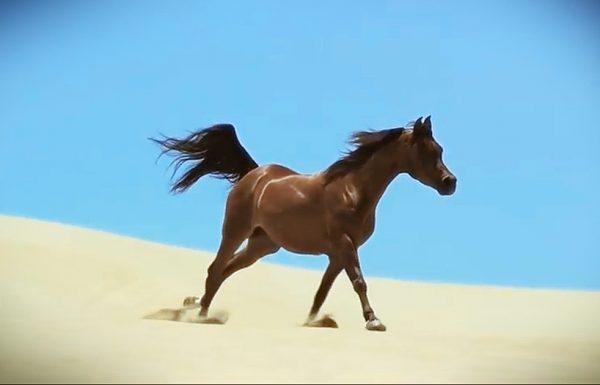 מצלמת הילוך איטי הוצבה מול הסוסים האלה. מה שהיא תיעדה היה מרהיב ועוצר נשימה