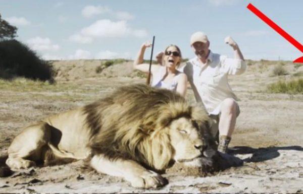 2 ציידים הצטלמו עם אריה מת, אך אז הם זכו לטעום נקמה שהם בחיים לא ציפו לה