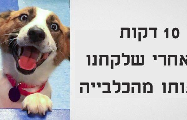 15 כלבים וחתולים לפני ואחרי שהם אומצו מהכלבייה ובית המחסה