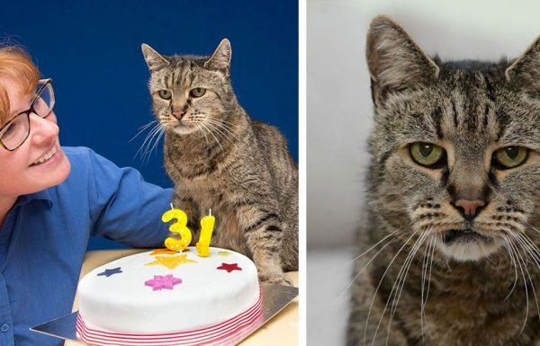 נאטמג הוא החתול הכי מבוגר בעולם – בדיוק חגג יום הולדת 31!