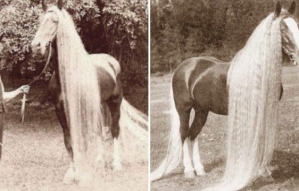 האמת מאחורי הסוסים הנדירים הללו שנכחדו במאה ה 19 היא מרתקת ומדהימה!