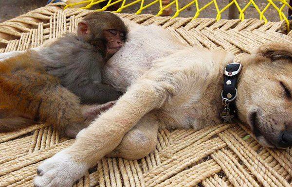 אין דבר חמוד יותר מאשר 31 בעלי החיים האלה שמשתמשים בבעלי חיים אחרים בתור כרית