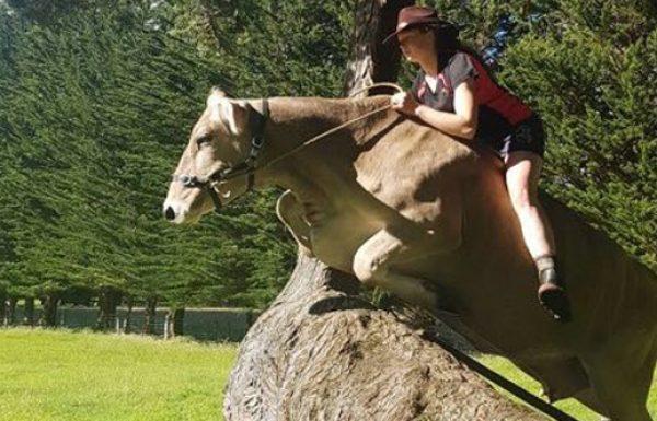 ההורים שלה לא הסכימו לקנות לה סוס, אז היא אילפה את הפרה שלה במקום