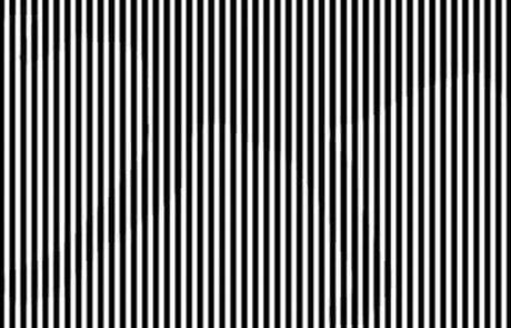 רק 7% מצליחים לראות את החיה שמסתתרת בתמונה – האם אתם יכולים?