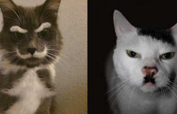 22 חתולים עם הפרווה הכי ייחודית ומדהימה שאי פעם תראו