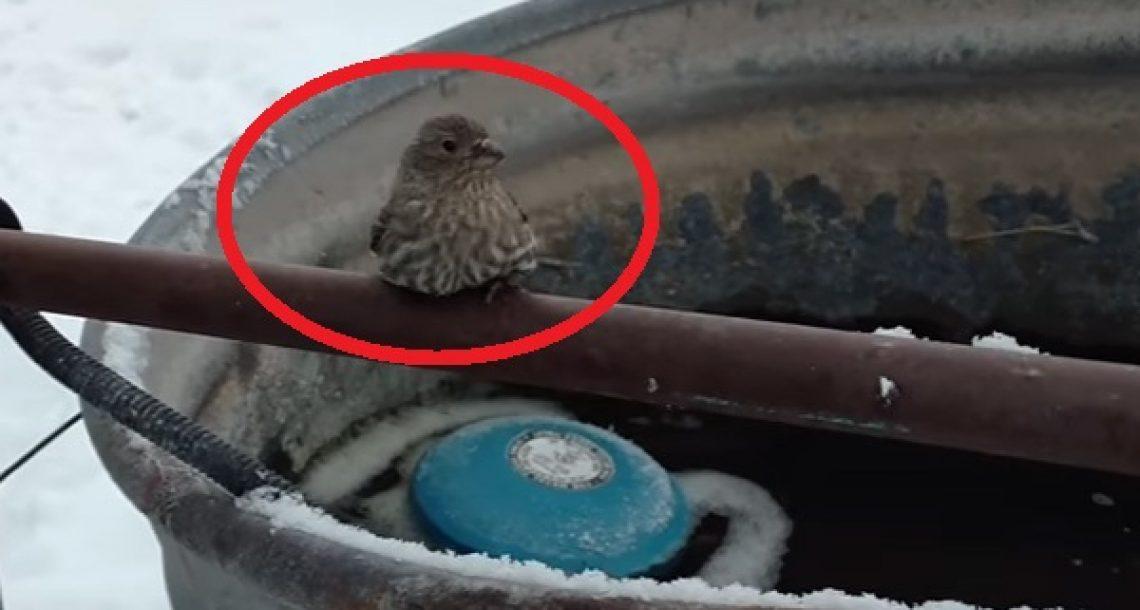 הבחור הזה הבחין בציפור שרגליה קפאו לגדר ברזל. עכשיו תראו איך הוא חילץ אותה…מדהים!