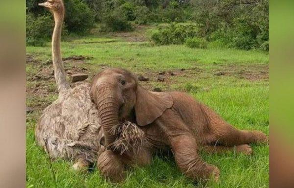 גור פילים יתום ובת יענה הם החברים הכי טובים אחרי שנאלצו להתגבר על עבר קשה במיוחד