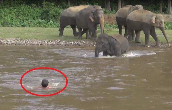 האיש הזה 'טבע' בנהר, עכשיו תראו מה עושה הפילה הקטנה…